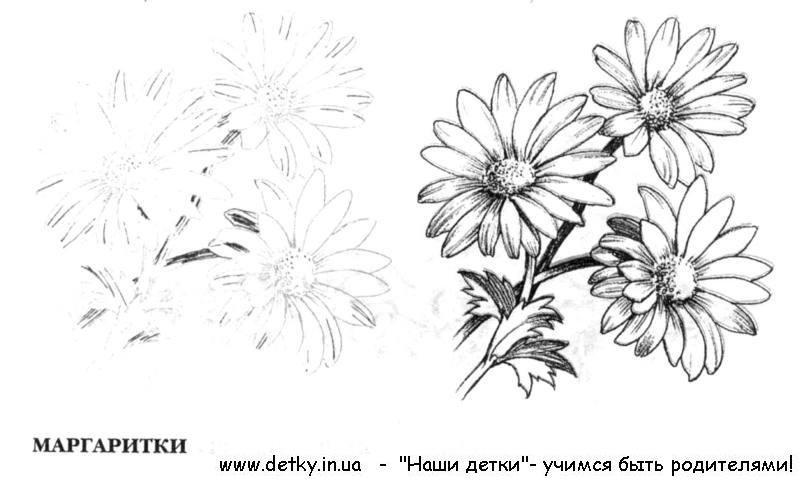 Картинки цветов в вазе нарисованные 4