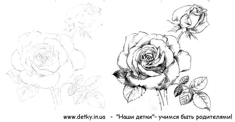 Картинки плетущихся цветов 1